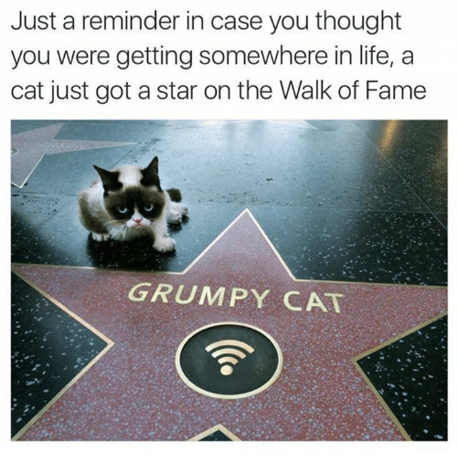Grumpy Cats: Just a reminder in case you thought  you were getting somewhere in life, a  cat just got a star on the Walk of Fame  GRUMPY CAT