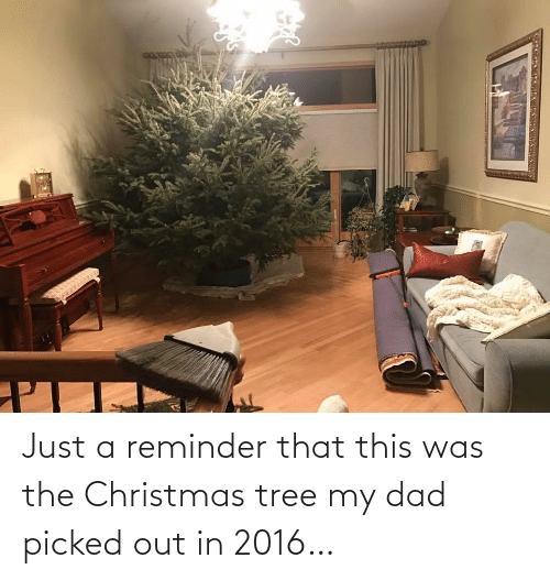 My Dad: Just a reminder that this was the Christmas tree my dad picked out in 2016…