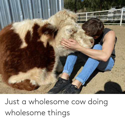 Just A: Just a wholesome cow doing wholesome things