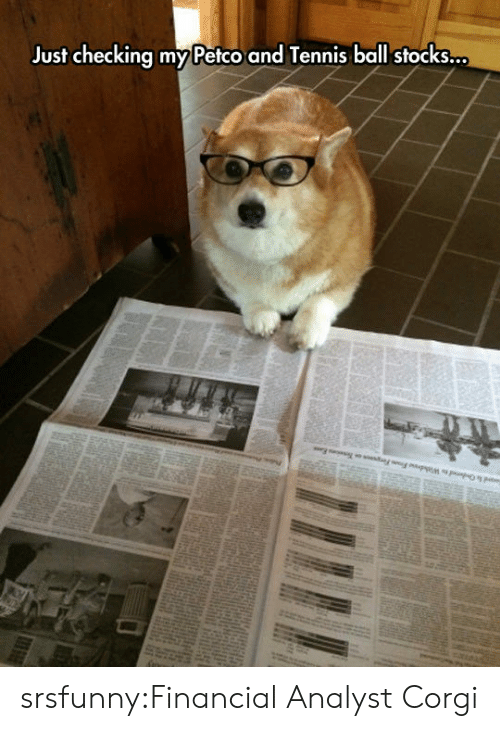 Analyst: Just checking my Petco and Tennis ball stocks... srsfunny:Financial Analyst Corgi