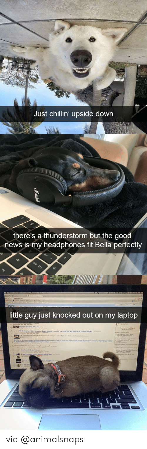 News, Target, and Tumblr: Just chillin' upside down   there's a thunderstorm but the good  news is my headphones fit Bella perfectly   ittle quy just knocked out on my laptop via @animalsnaps