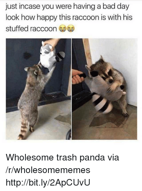 Bad, Bad Day, and Trash: just incase you were having a bad day  look how happy this raccoon is with his  stuffed raccoo Wholesome trash panda via /r/wholesomememes http://bit.ly/2ApCUvU