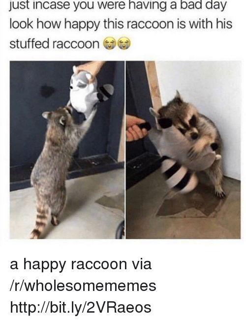 Just Incase: just incase you were having a bad day  look how happy this raccoon is with his  stuffed raccoon a happy raccoon via /r/wholesomememes http://bit.ly/2VRaeos