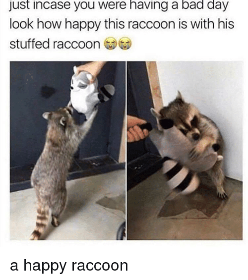 Just Incase: just incase you were having a bad day  look how happy this raccoon is with his  stuffed raccoon a happy raccoon