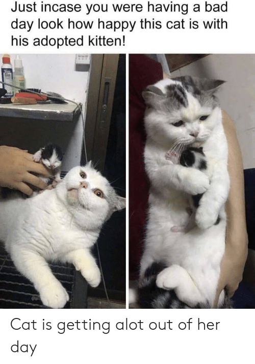 incase: Just incase you were having a bad  day look how happy this cat is with  his adopted kitten! Cat is getting alot out of her day