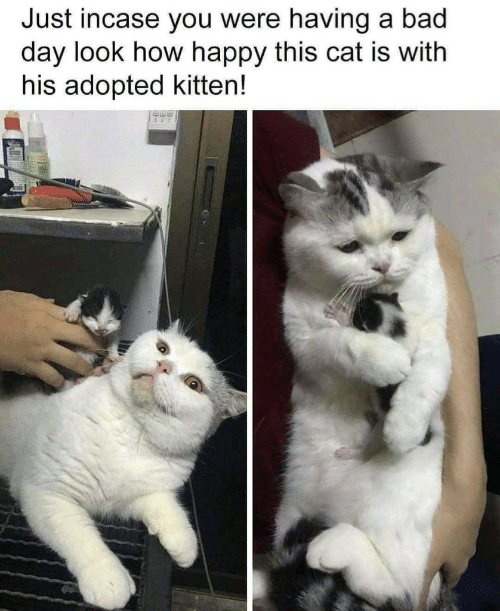 incase: Just incase you were having a bad  day look how happy this cat is with  his adopted kitten!