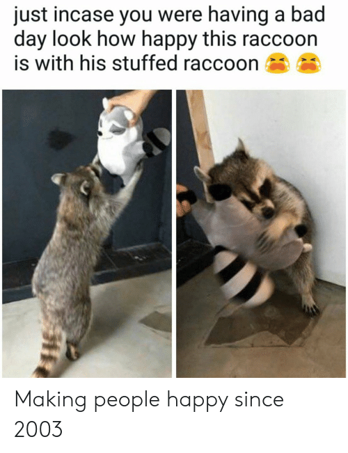 incase: just incase you were having a bad  day look how happy this raccoon  is with his stuffed raccoon Making people happy since 2003