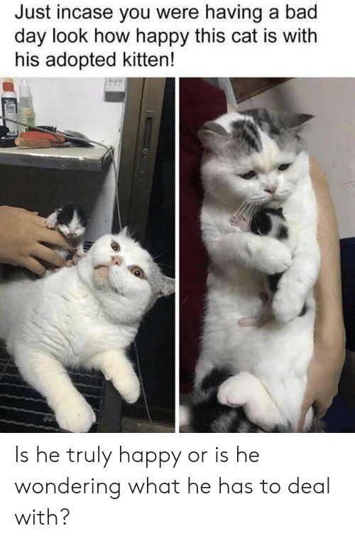incase: Just incase you were having a bad  day look how happy this cat is with  his adopted kitten! Is he truly happy or is he wondering what he has to deal with?