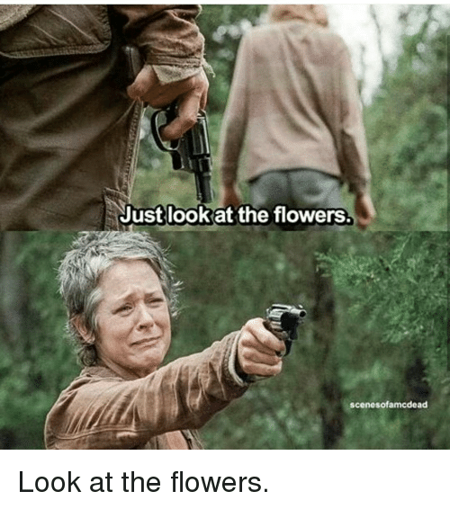 Memes, Flower, and Flowers: Just look at the flowers.  scenesofamcdead Look at the flowers.