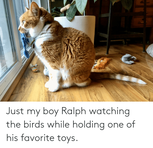 Of His: Just my boy Ralph watching the birds while holding one of his favorite toys.