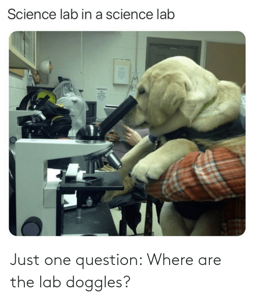 question: Just one question: Where are the lab doggles?
