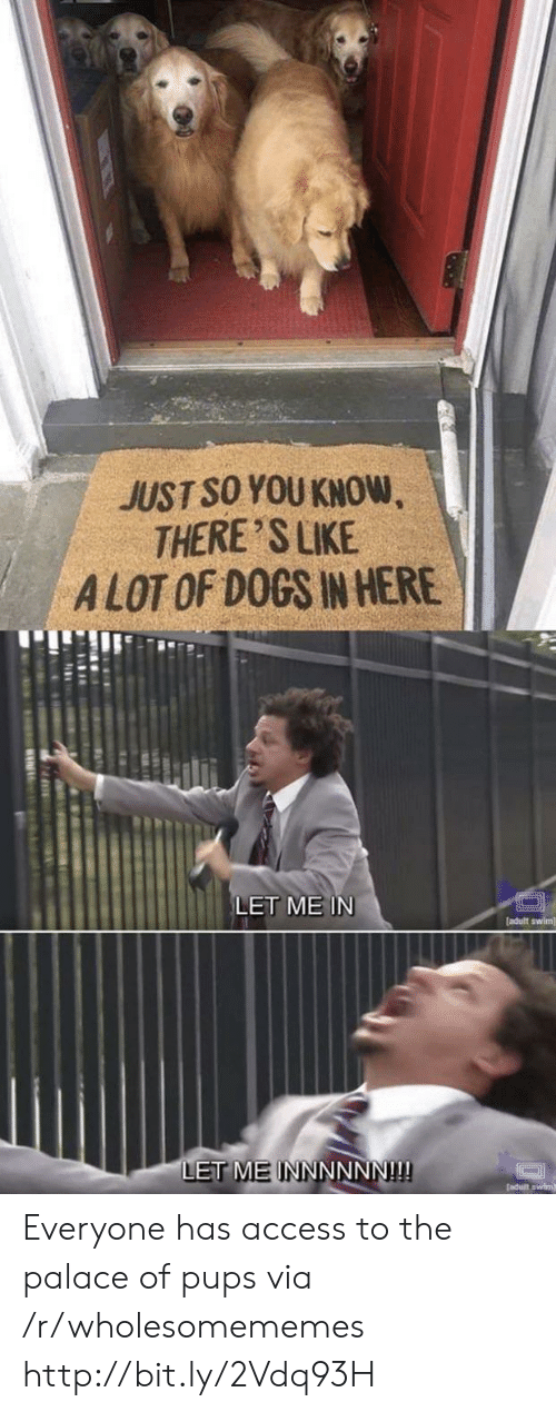 palace: JUST SO YOU KNOW  THERE 'S LIKE  ALOT OF DOGS IN HERE  LET ME IN  [adult swim]  LET MEINNNNNN!!! Everyone has access to the palace of pups via /r/wholesomememes http://bit.ly/2Vdq93H