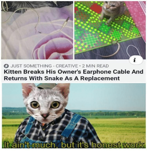 kitten: JUST SOMETHING CREATIVE 2 MIN READ  Kitten Breaks His Owner's Earphone Cable And  Returns With Snake As A Replacement  It ainit much, but it's honest work