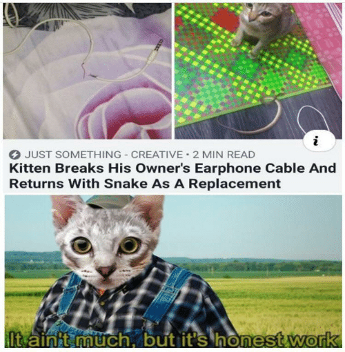 kitten: JUST SOMETHING CREATIVE 2 MIN READ  Kitten Breaks His Owner's Earphone Cable And  Returns With Snake As A Replacement  It ainit much, but it's honest.work