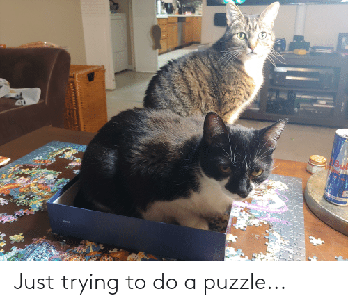 Trying To Do: Just trying to do a puzzle...