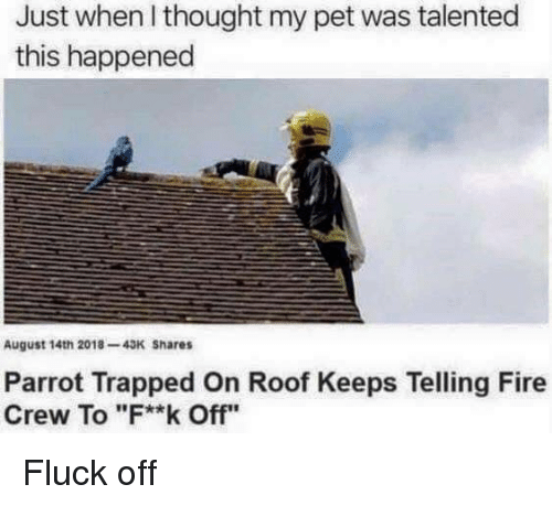 "Fire, Thought, and Parrot: Just when I thought my pet was talented  this happened  August 14th 2018-43K Shares  Parrot Trapped On Roof Keeps Telling Fire  Crew To ""F**k Off"" Fluck off"
