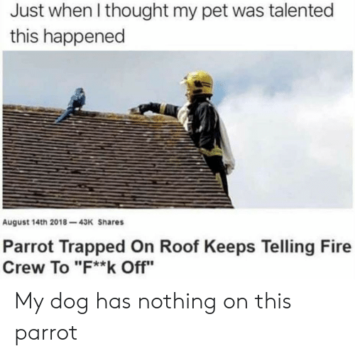 "parrot: Just when I thought my pet was talented  this happened  August 14th 2018-43K Shares  Parrot Trapped On Roof Keeps Telling Fire  Crew To ""F**k Off"" My dog has nothing on this parrot"