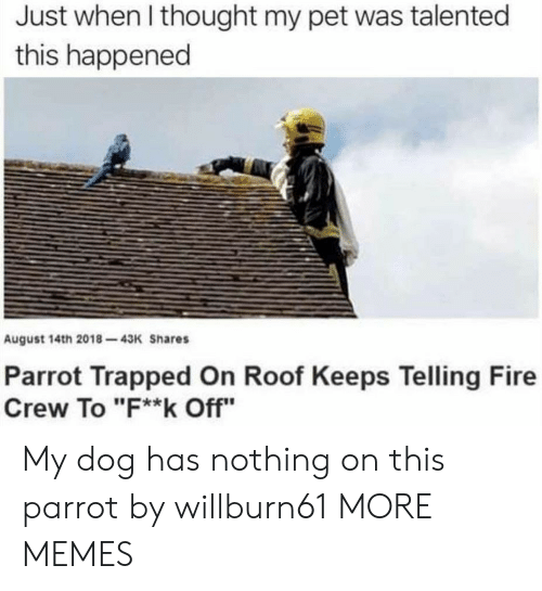 "parrot: Just when I thought my pet was talented  this happened  August 14th 2018-43K Shares  Parrot Trapped On Roof Keeps Telling Fire  Crew To ""F**k Off"" My dog has nothing on this parrot by willburn61 MORE MEMES"