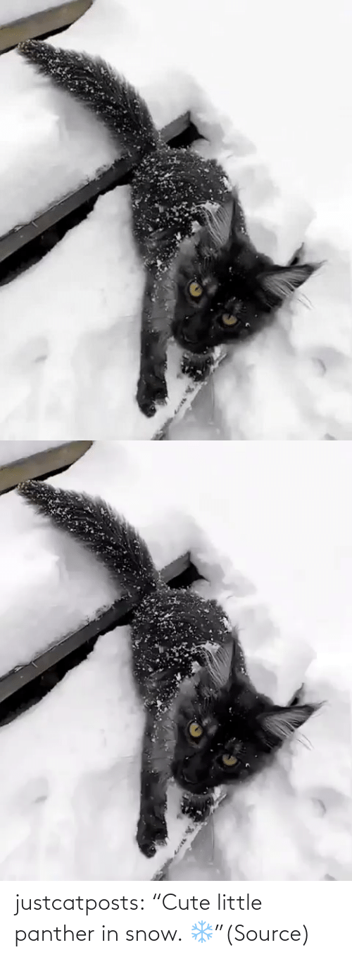 """Snow: justcatposts:  """"Cute little panther in snow. ❄️""""(Source)"""