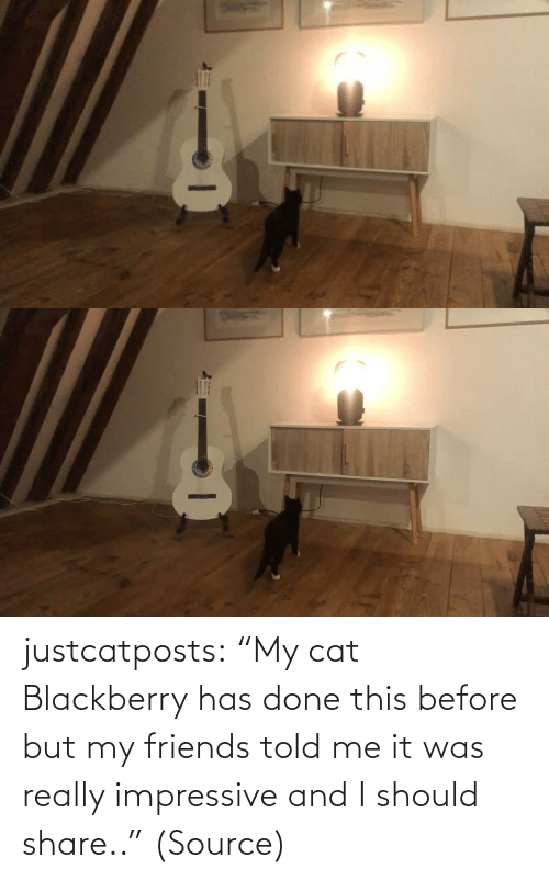"Cats: justcatposts:  ""My cat Blackberry has done this before but my friends told me it was really impressive and I should share.."" (Source)"