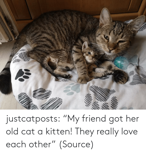 "Each: justcatposts:  ""My friend got her old cat a kitten! They really love each other"" (Source)"