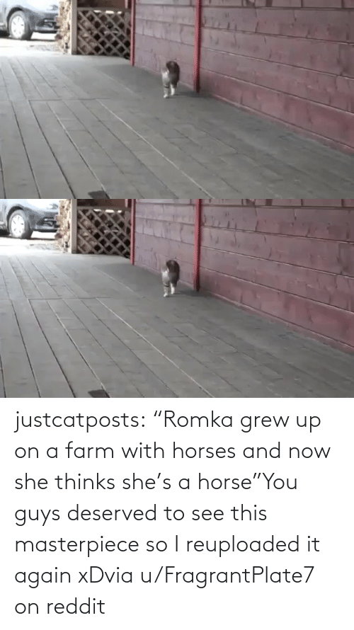 "see: justcatposts:  ""Romka grew up on a farm with horses and now she thinks she's a horse""You guys deserved to see this masterpiece so I reuploaded it again xDvia u/FragrantPlate7 on reddit"