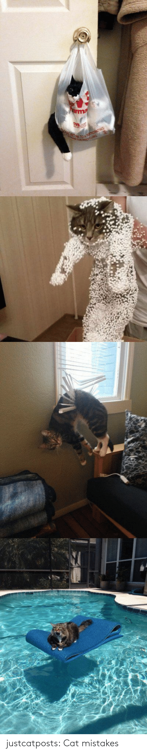 cat: justcatposts:  Cat mistakes