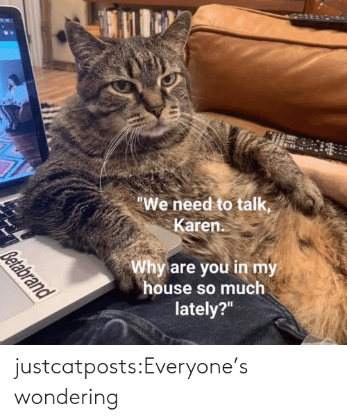 Blank: justcatposts:Everyone's wondering