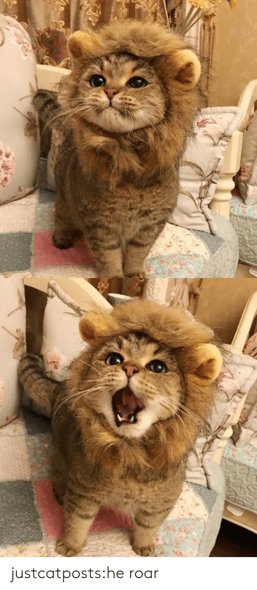 roar: justcatposts:he roar