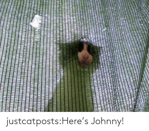 Blank: justcatposts:Here's Johnny!