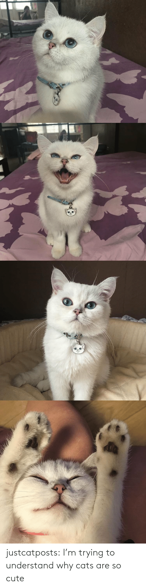 Cats: justcatposts:  I'm trying to understand why cats are so cute