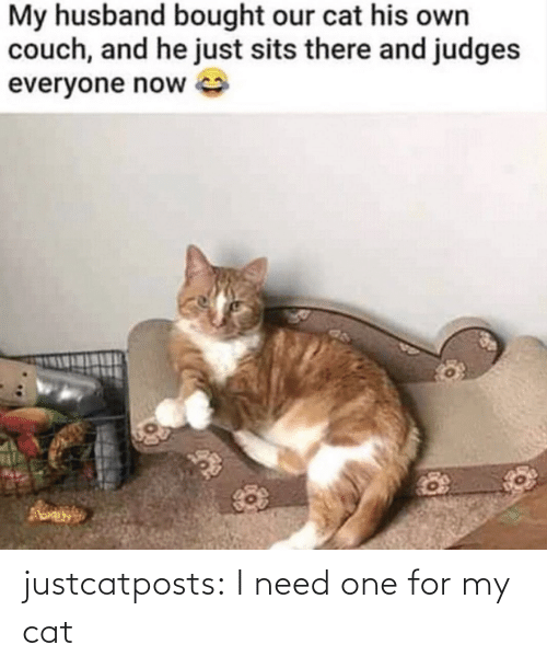 I Need: justcatposts:  I need one for my cat