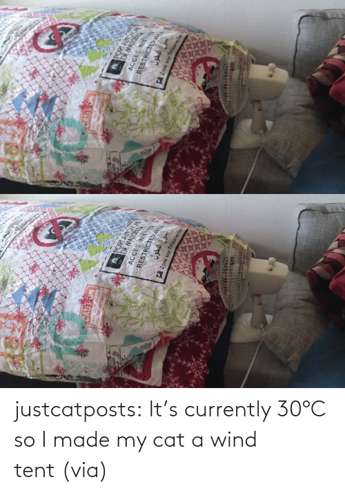 Its: justcatposts:  It's currently 30°C so I made my cat a wind tent (via)