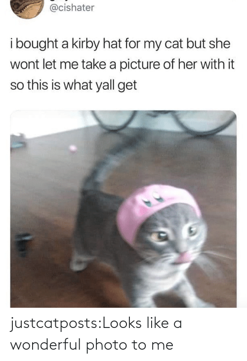 Blank: justcatposts:Looks like a wonderful photo to me