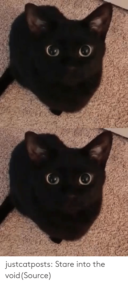 stare: justcatposts:  Stare into the void(Source)