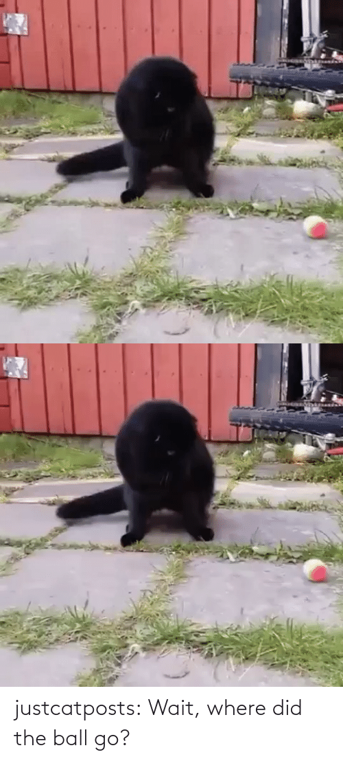 where did: justcatposts:  Wait, where did the ball go?