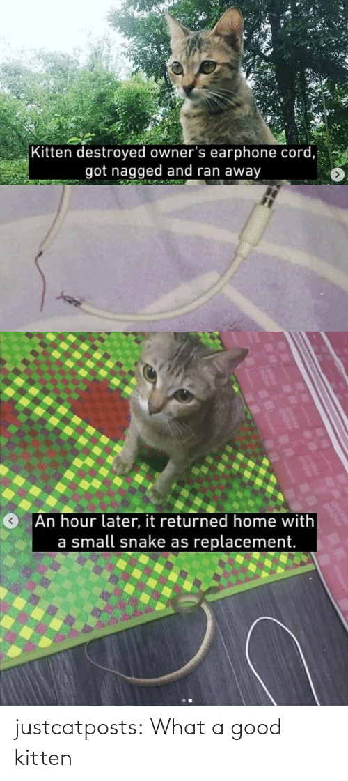 what a: justcatposts:  What a good kitten