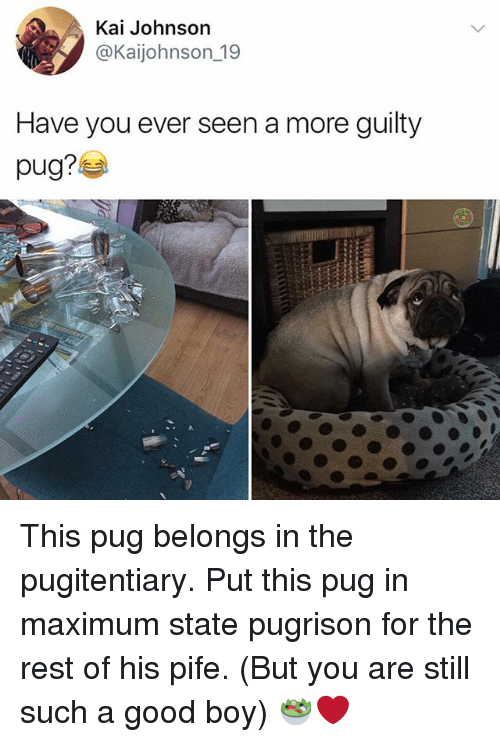 Pugly: Kai Johnson  @Kaijohnson 19  Have you ever seen a more guilty This pug belongs in the pugitentiary. Put this pug in maximum state pugrison for the rest of his pife. (But you are still such a good boy) 🥗❤️