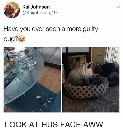 Pugly: Kai Johnson  @Kaijohnson_19  Have you ever seen a more guilty  pug? LOOK AT HUS FACE AWW