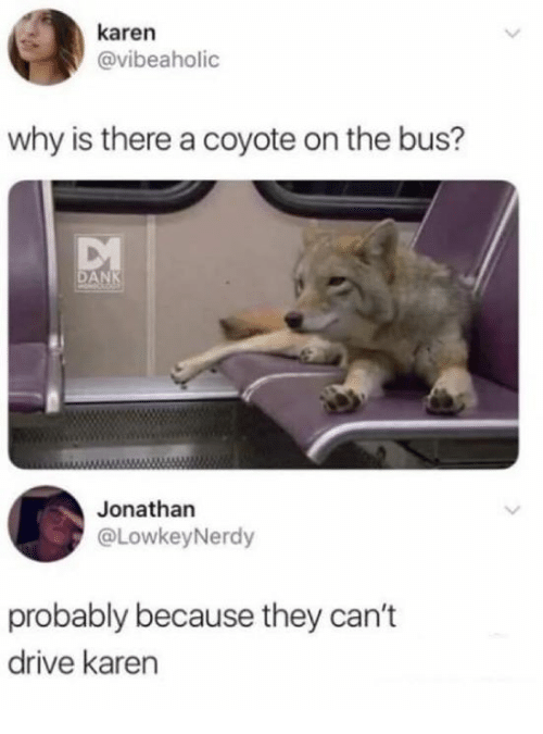 Dank, Coyote, and Drive: karen  @vibeaholic  why is there a coyote on the bus?  DAN  Jonathan  @LowkeyNerdy  probably because they can't  drive karen
