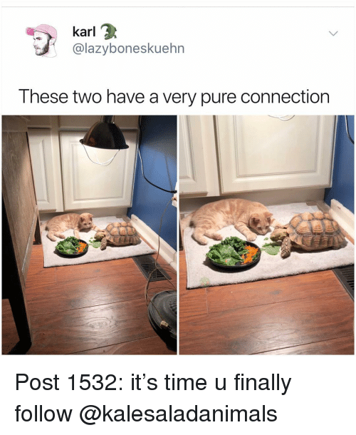 Memes, Time, and 🤖: karl  @lazyboneskuehrn  These two have a very pure connection Post 1532: it's time u finally follow @kalesaladanimals