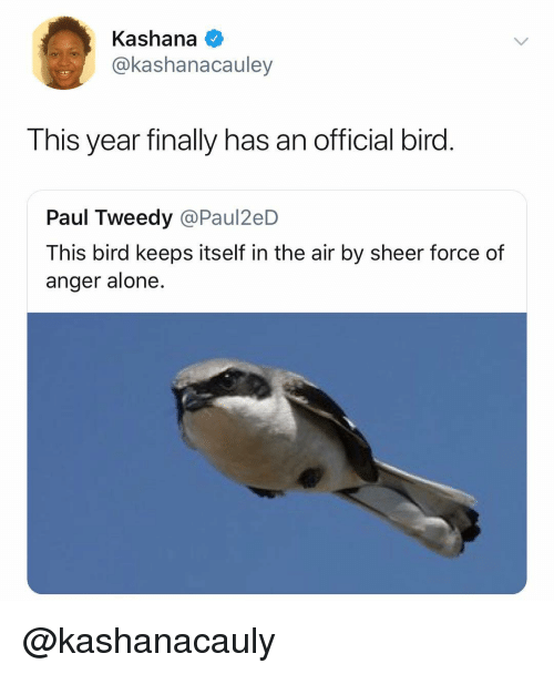 Being Alone, Dank Memes, and Air: Kashana  @kashanacauley  This year finally has an official bird  Paul Tweedy @Paul2eD  This bird keeps itself in the air by sheer force of  anger alone. @kashanacauly