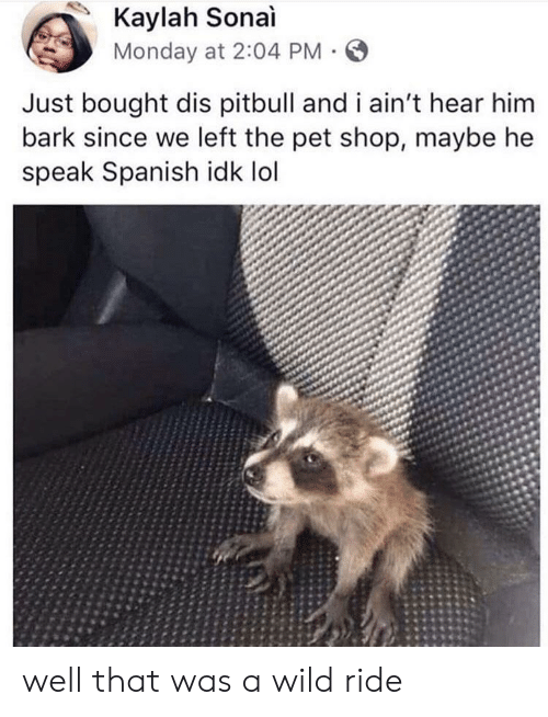 Lol, Spanish, and Pitbull: Kaylah Sonai  Monday at 2:04 PM  Just bought dis pitbull and i ain't hear him  bark since we left the pet shop, maybe he  speak Spanish idk lol well that was a wild ride