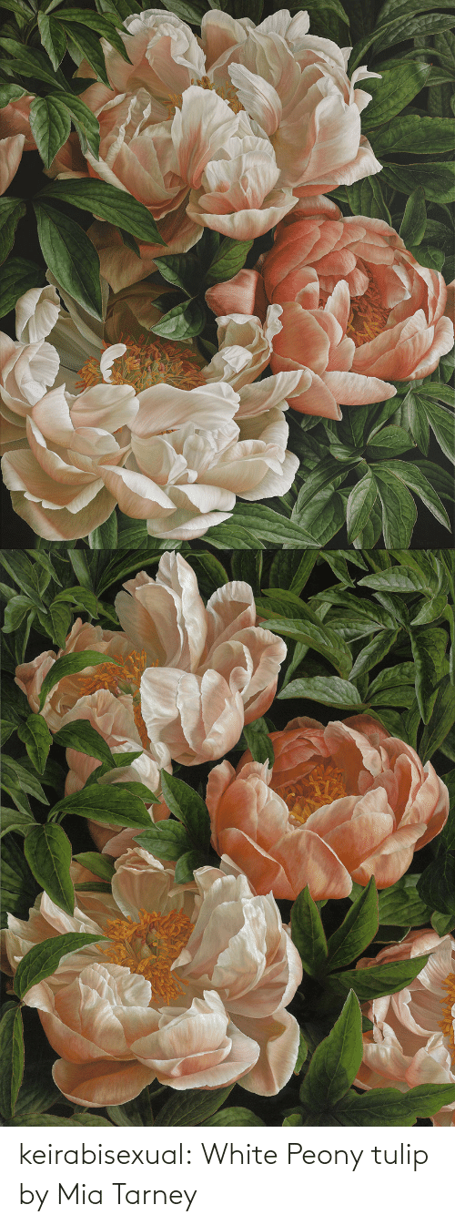 Paintings, Tumblr, and Blog: keirabisexual: White Peony tulip by Mia Tarney