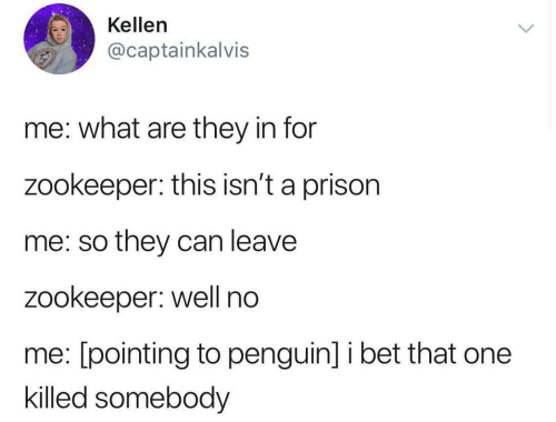 pointing: Kellen  @captainkalvis  me: what are they in for  zookeeper: this isn't a prison  me: so they can leave  zookeeper: well no  me: [pointing to penguin] i bet that one  killed somebody