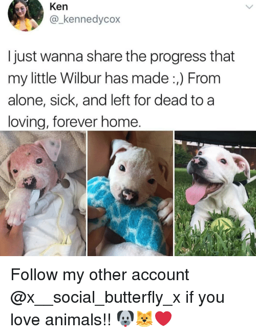 Being Alone, Animals, and Ken: Ken  @_kennedycox  I just wanna share the progress that  my little Wilbur has made:,) From  alone, sick, and left for dead to a  loving, forever home. Follow my other account @x__social_butterfly_x if you love animals!! 🐶🐱❤