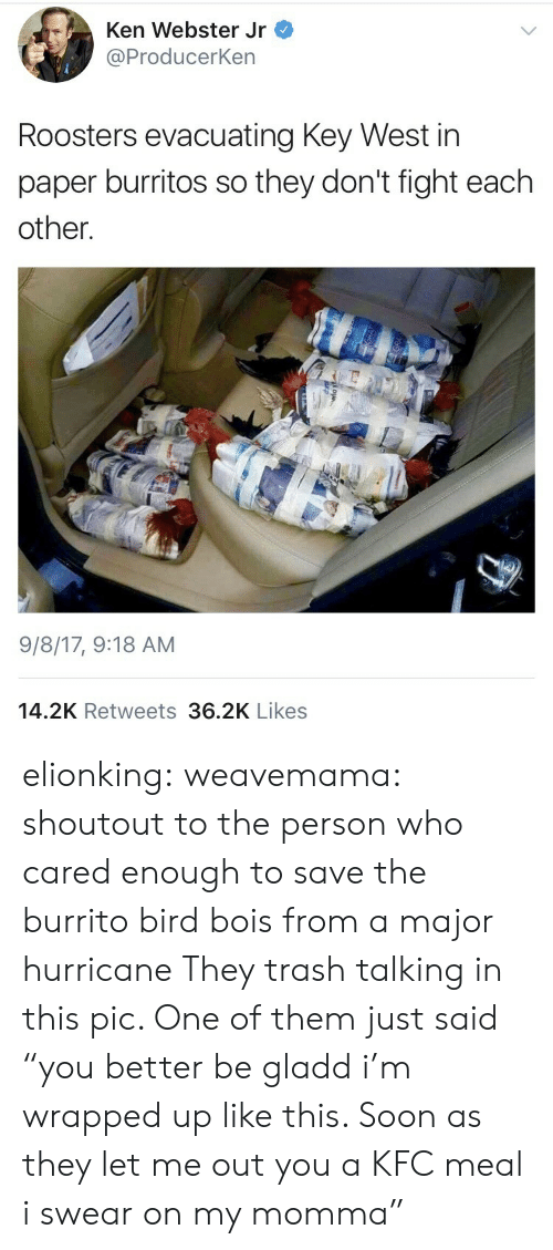 """trash talking: Ken Webster Jr  @ProducerKen  Roosters evacuating Key West in  paper burritos so they don't fight each  other.  9/8/17, 9:18 AM  14.2K Retweets 36.2K Likes elionking: weavemama: shoutout to the person who cared enough to save the burrito bird bois from a major hurricane  They trash talking in this pic. One of them just said """"you better be gladd i'm wrapped up like this. Soon as they let me out you a KFC meal i swear on my momma"""""""