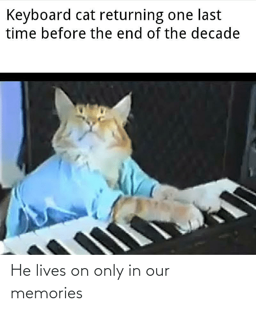 last time: Keyboard cat returning one last  time before the end of the decade He lives on only in our memories
