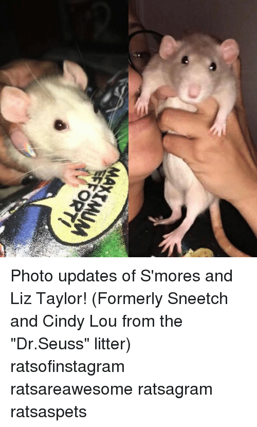 KfMUAA ORT! Photo Updates of S'mores and Liz Taylor! Formerly
