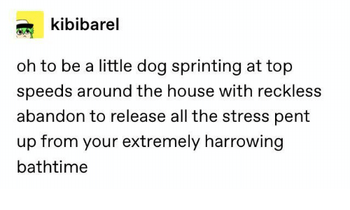 sprinting: kibibarel  oh to be a little dog sprinting at top  speeds around the house with reckless  abandon to release all the stress pent  up from your extremely harrowing  bathtime